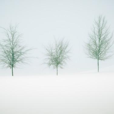 """We Three Trees"""