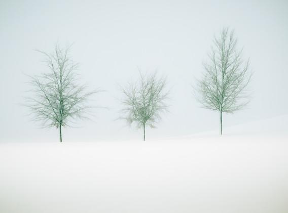 _We Three Trees_