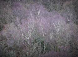 """""""Tree Dreams"""""""