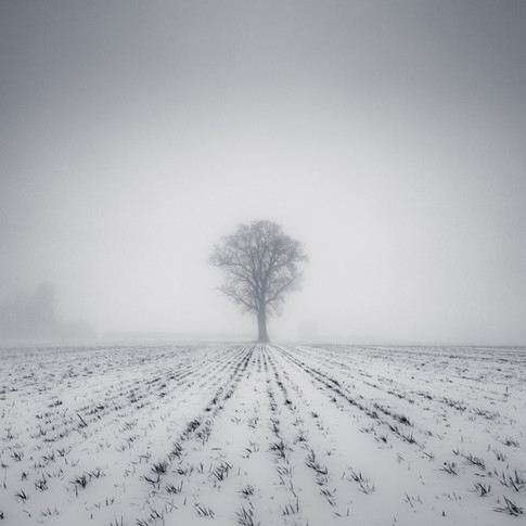 """Misty Tree"""
