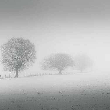 """""""Into the Mist"""""""