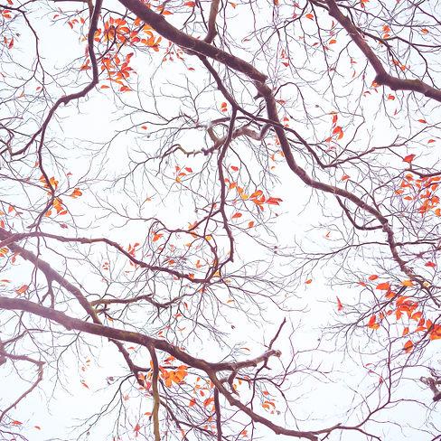 Abstract Autumn.jpg