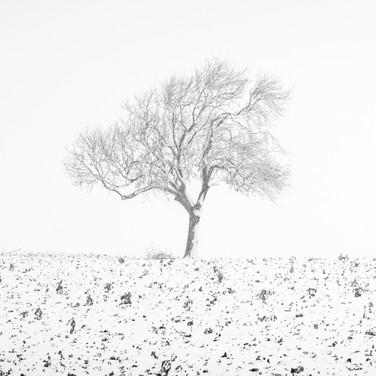 """""""A Winter's Tale"""""""