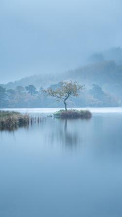 Rydal Lone Tree
