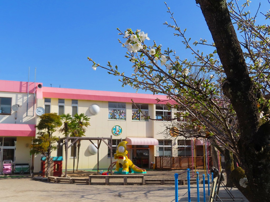 1537 15,19, 桜の開花(2)