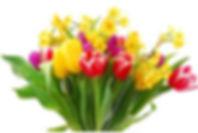 bowl tulips and daffodils.jpg