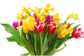 bowl tulips and daffodils.jpg
