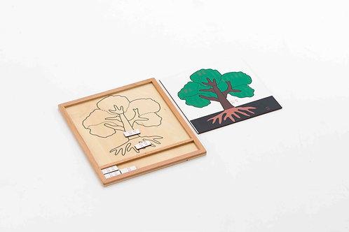 Plant Activity Group - Names of Tree's Part 彩色植物活动组-树的部位名称-中文加拼音