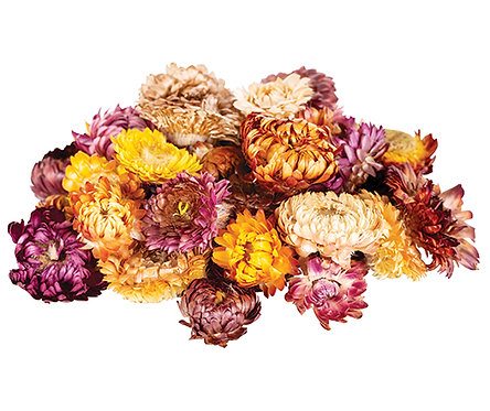Dried Sun Flowers Asst 50g