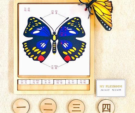 Animal Activity Group-Butterfly Part's Names 彩色动物活动组-蝴蝶的部位名称-中文加拼音