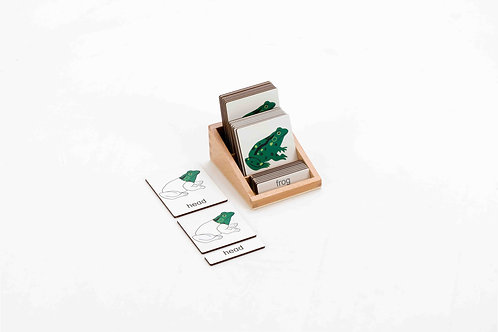 Classification 3 Part Timber Cards - Frog Parts 8 pcs (With Box)