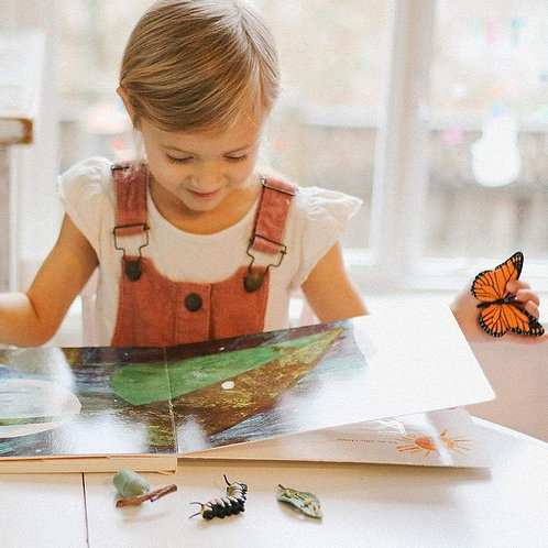 Life Cycle of a Monarch Butterfly Montessori Language Figurines Collection