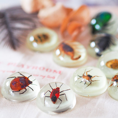 Magnetic Insect specimens ( Glow in the dark )