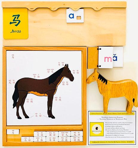 Animal Activity Group-Names of Horse's Parts 彩色动物活动组-马的部位名称-中文加拼音