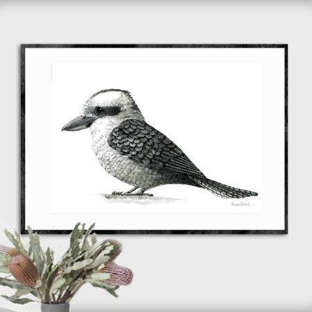 A2 Fine Art Print – Kookaburra