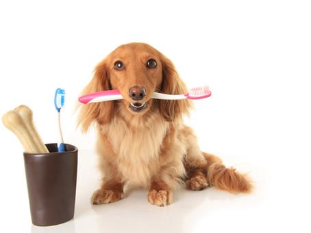 Нужен ли ветеринарный стоматолог нашим питомцам?