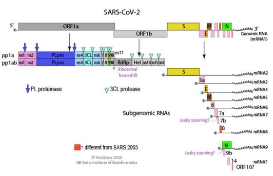 Chủng mới virus Sars-Cov-2 tại Việt Nam là gì?