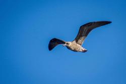 Seabird, Kaikoura NZ