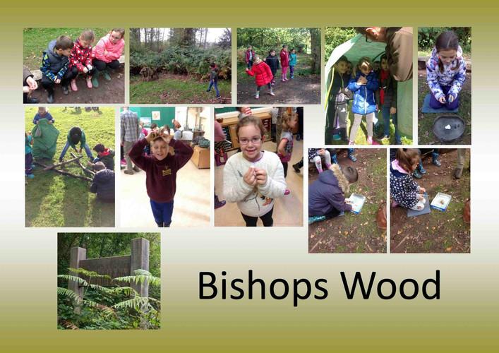 Y3-Bishops-Wood 2.jpg