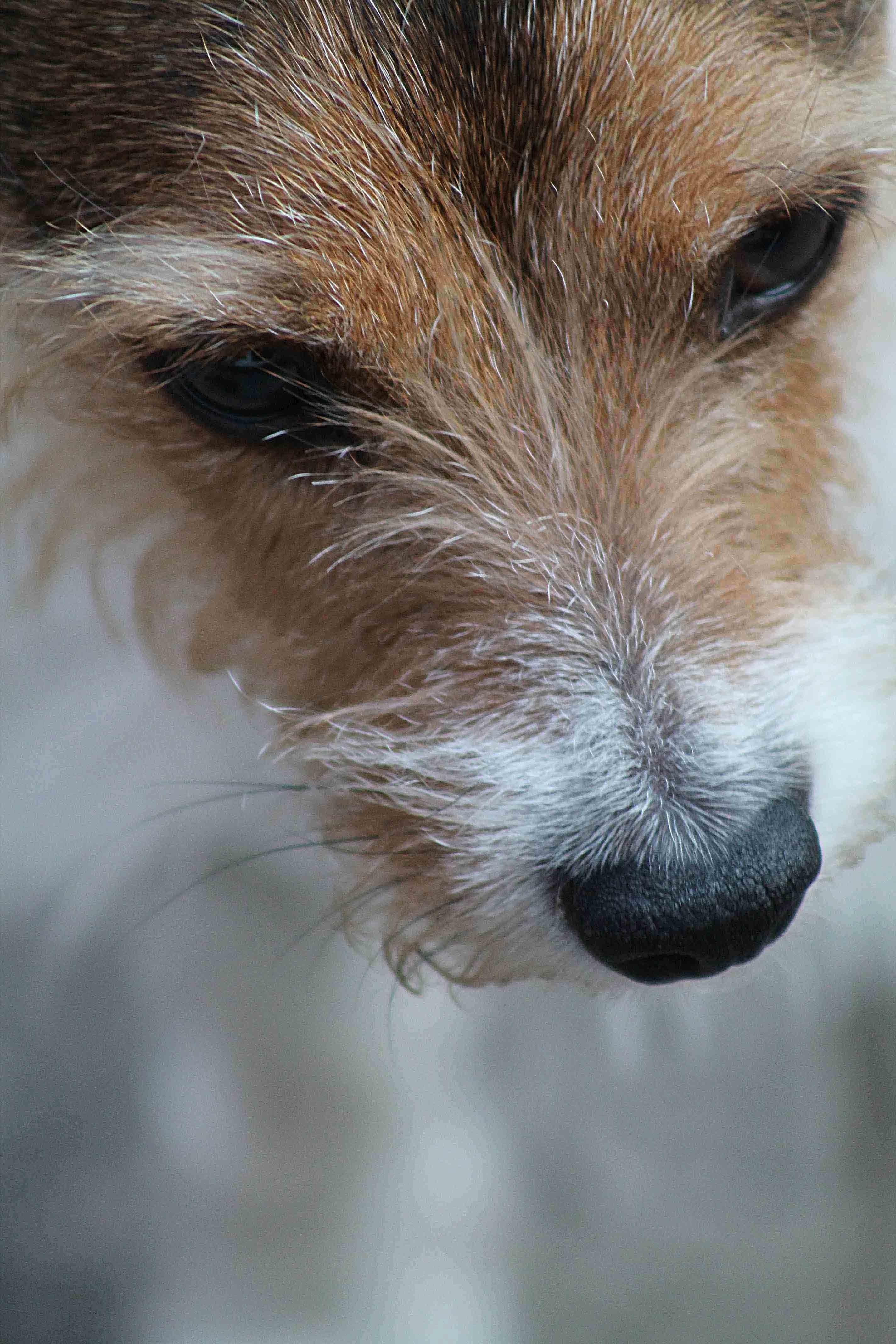 Sean Macreavy Media - Family & pets 5-