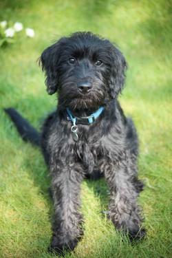 Sean Macreavy Media - Family & pets 5-6
