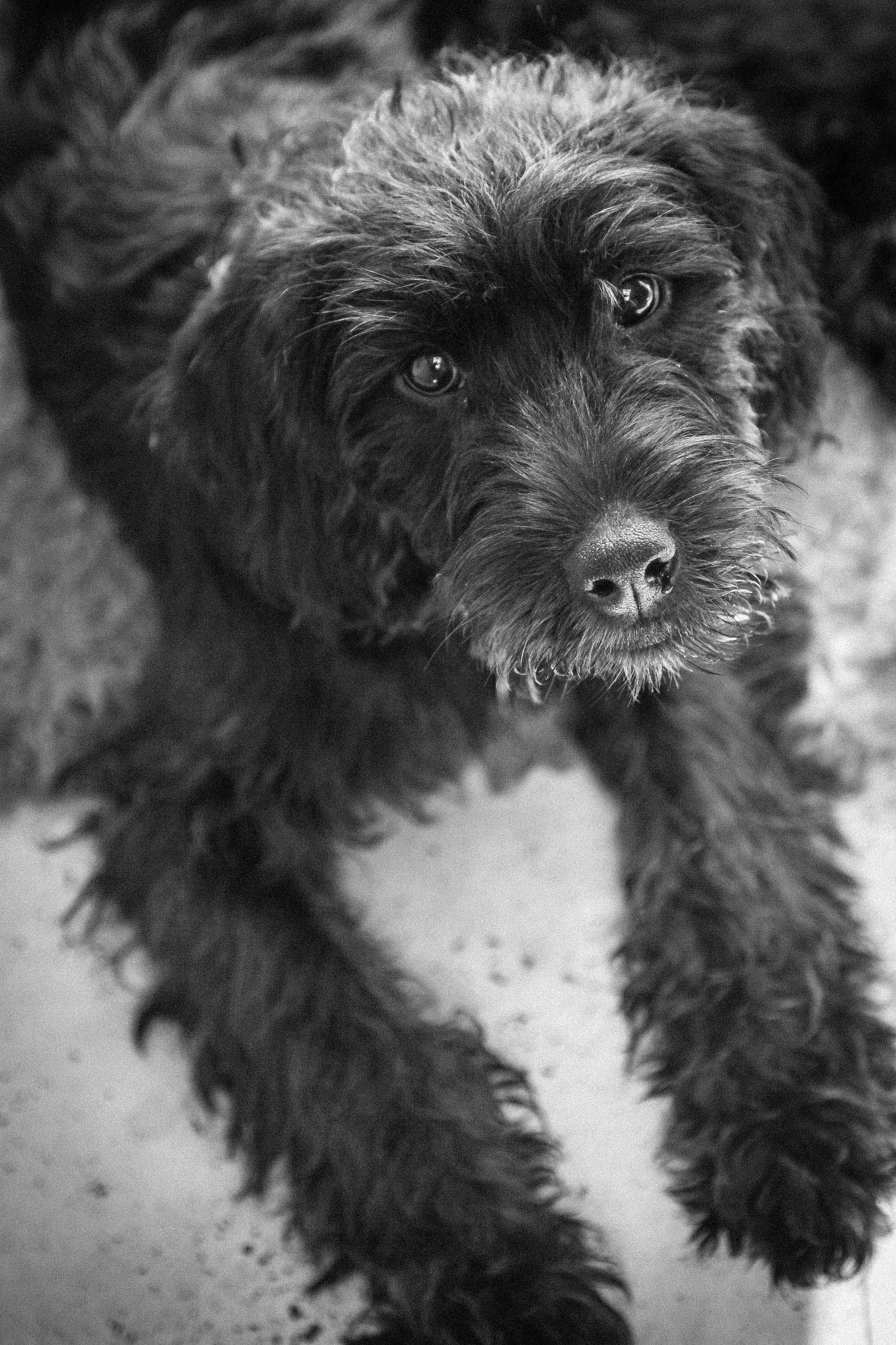 Sean Macreavy Media - Family & pets 5-3-3
