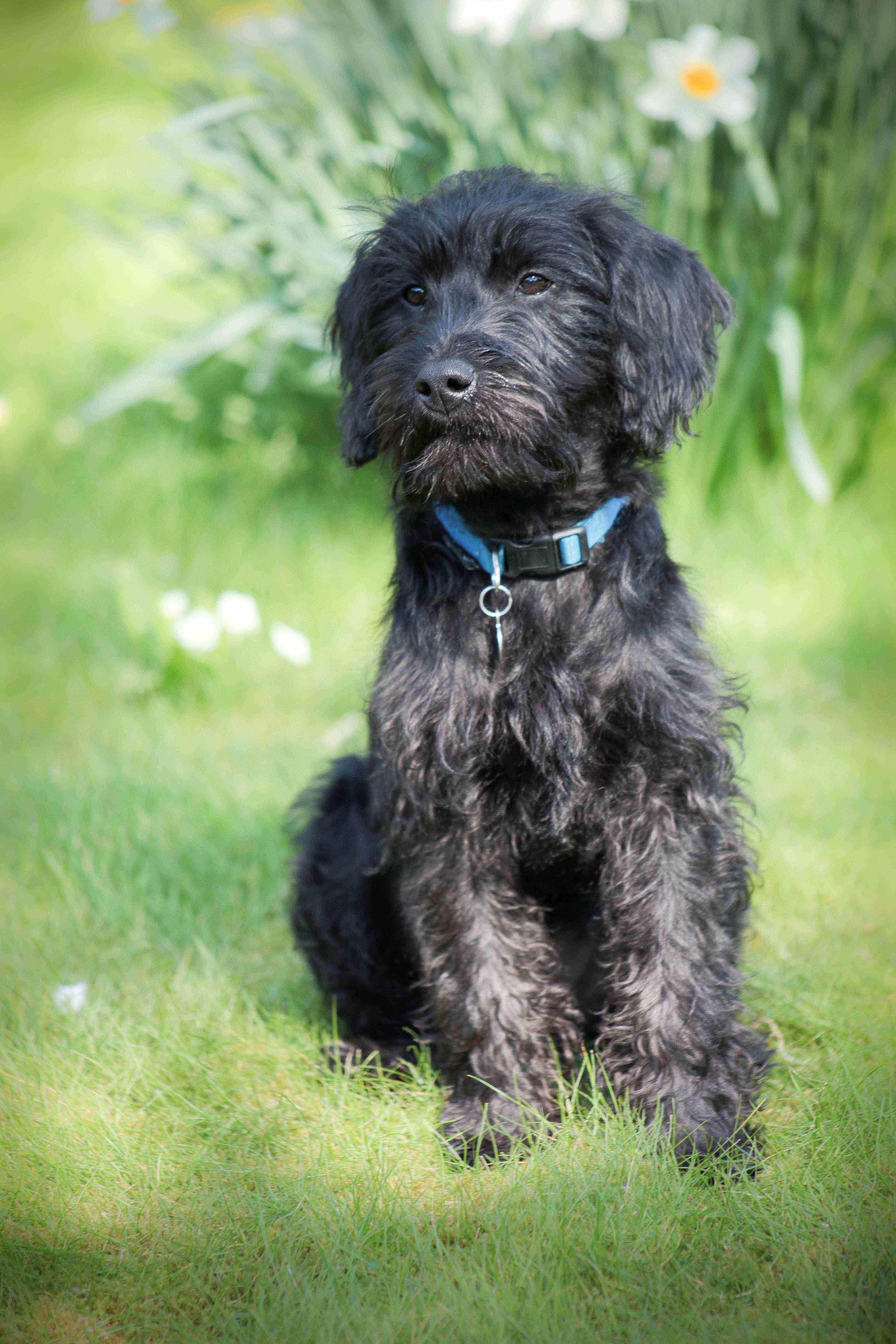 Sean Macreavy Media - Family & pets 5-5-2