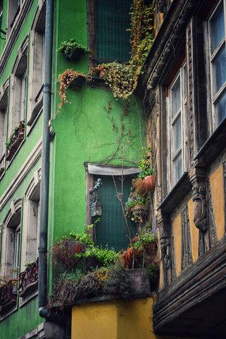 Strasbourg Windowsill