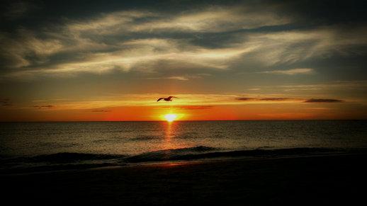 West Coast Sunset