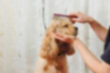 dog grooming 19.jpg