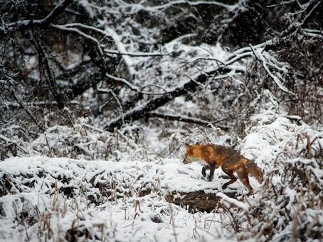 Sparkle Stories: Snow Falls