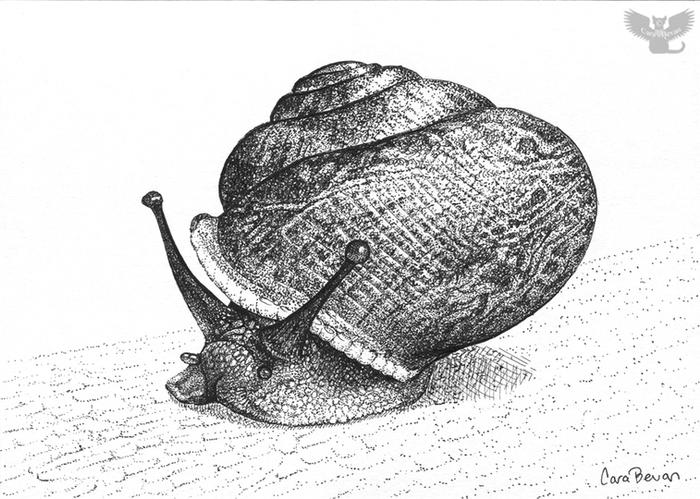 Snail Poe