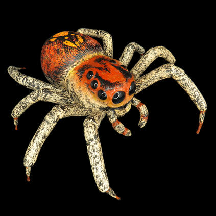 Large Jumping spider
