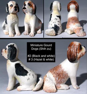 Miniature ShihTzu dogs