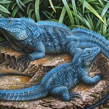 Blue-Iguanas.jpg