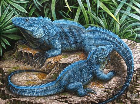 The Grand Cayman Blue Iguanas