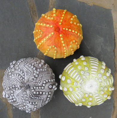 Gourd Sea Urchin collection