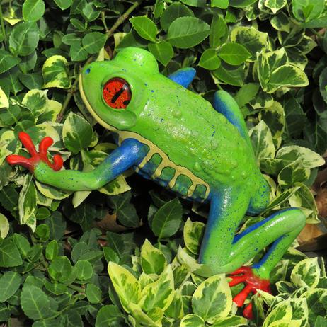 Frog #154 - Red-Eye Tree Frog