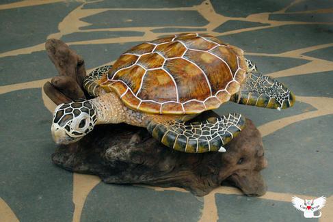 """Mama"" Green Sea Turtle, #HR6"