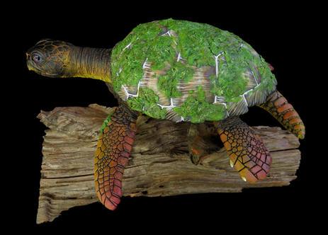 """Bruce"" the mossy Loggerhead Sea Turtle. #HR17"