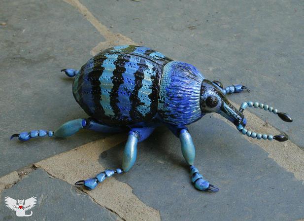 Blue Weevil