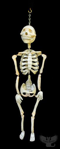 Shelly the Skeleton