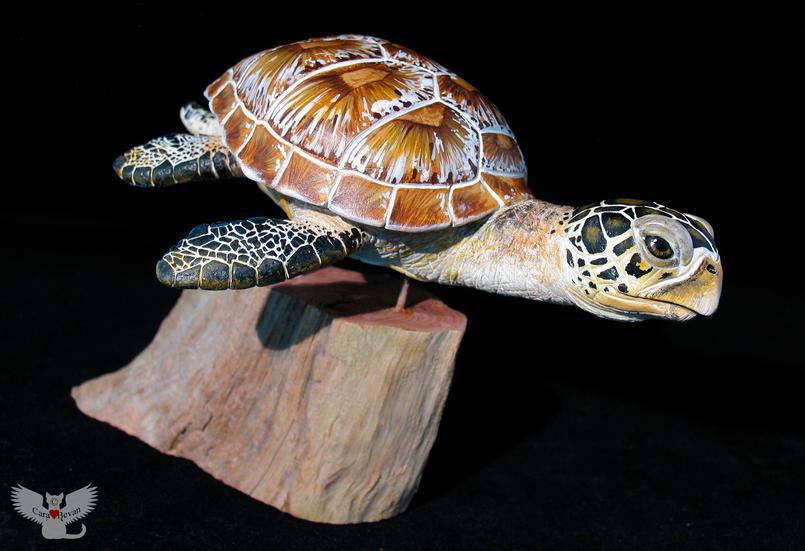 Green Sea Turtle, #HR3