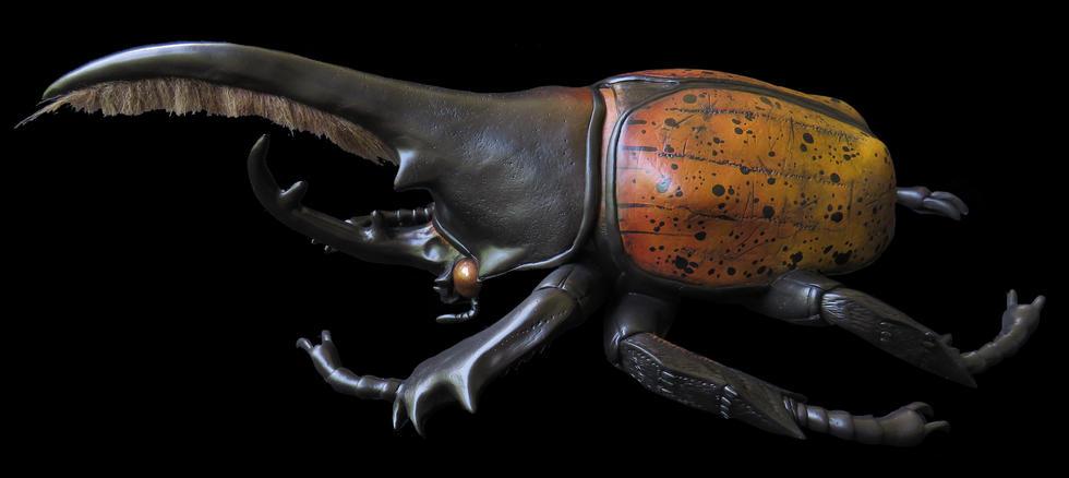 XL Dynsaty Hercules Beetle