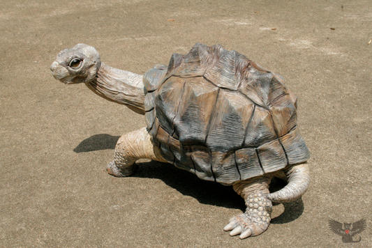 """George"" the Galapagos Tortoise, #HR4"
