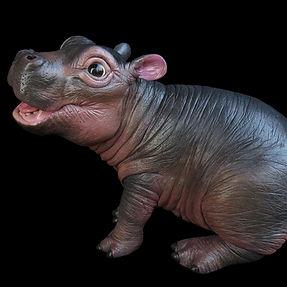 Myn Hippo CROP.jpg