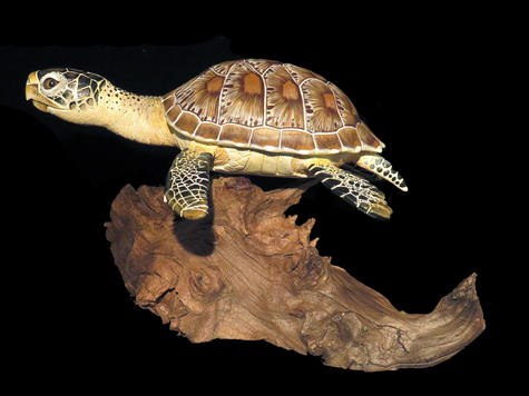 Green Sea Turtle, #HR9
