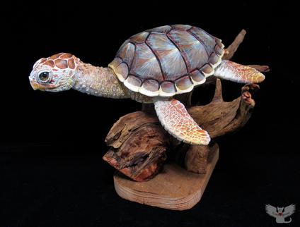 Loggerhead Sea Turtle, #HR8