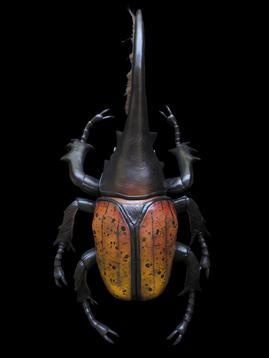XL Dynasty Hercules Beetle