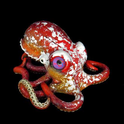 Miniature Octopus #13